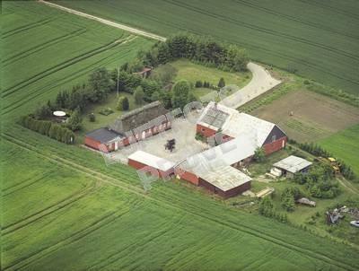 Gejsing Skov 1999
